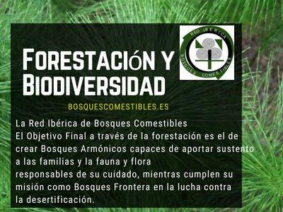 Forestación y Biodiversidad