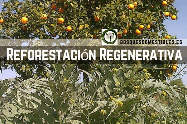 Reforestacion Regenerativa de la Red Ibérica
