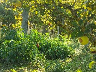 Diseñar Bosques Alimenticios