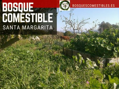 Bosque Comestible en Santa Margarita