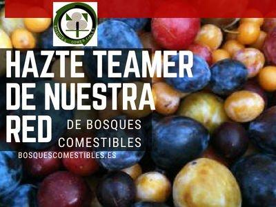 Hazte Teamer de la Red Ibérica