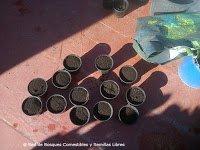 Preparando los semilleros para losbancales profundos 2