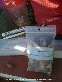 Semillas para los semilleros para losbancales profundos edp