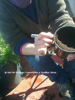 Preparando los semilleros para losbancales profundos 3