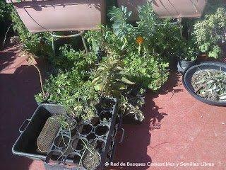 Preparando los semilleros para losbancales profundos 6