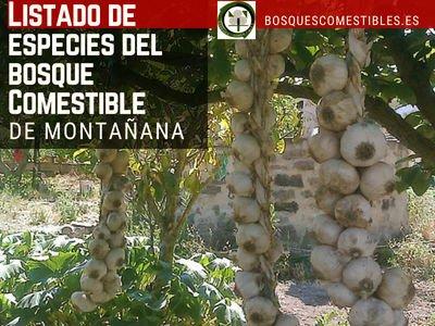 Listado de Especies para el Bosque Comestible de Montañana, el Dosel