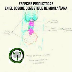 Especies Productoras en el Bosque Comestible de Montañana