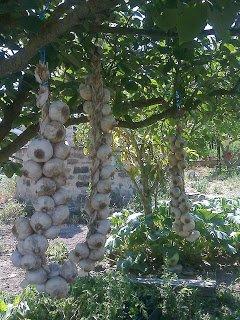 diseño de bosques comestibles gratis en españa