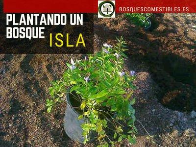 Plantando un Bosque Isla
