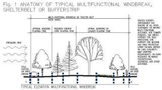 Hacer cortavientos con alturas de vegetación arbórea