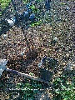 Plantando un bosque isla con arboles