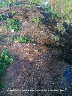 Plantando un bosque isla con plantas que sujeten la tierra
