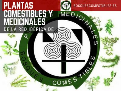 Plantas Comestibles y Medicinales