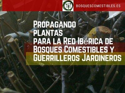 Propagando plantas para la Red Ibérica de Bosques Comestibles y Guerrilleros Jardineros