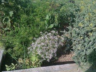 Propagando Plantas en Bancales Profundos