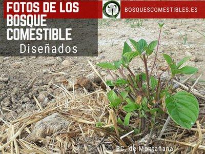 Nuevos Bosques Comestibles de la Red Ibérica