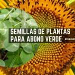 Semillas de Plantas para Abono Verde