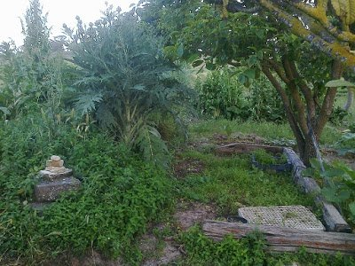 Nuevos bosques comestibles Santa Margarita 2