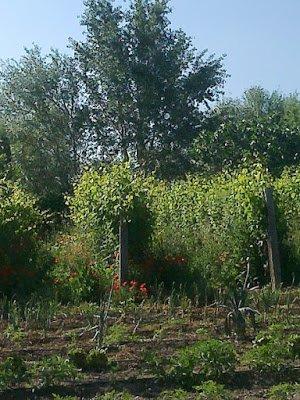 Nuevos bosques comestibles Santa Margarita 1