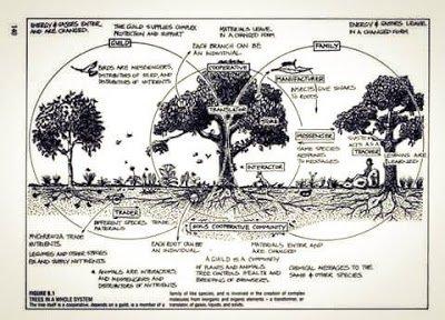 Haciendo Bosques con sus ciclos