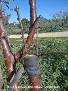 """Pasos para Diseñar un Bosque Comestible """" Trabajar con lo que se tiene"""""""