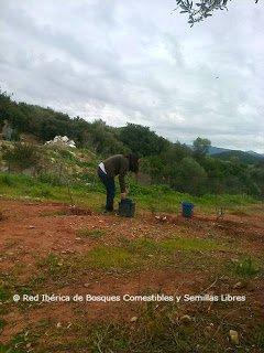 Pasos para Diseñar un Bosque Comestible Identificación de zonas Calientes