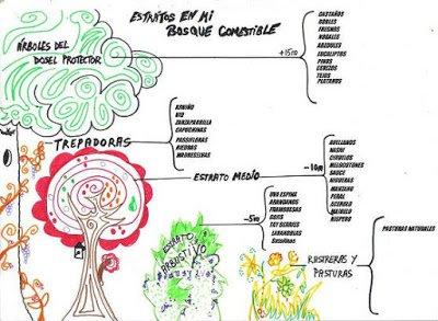 Especies del bosque comestible del lambruxo