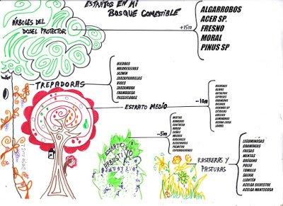 bosque comestible patic bosc selección de especies
