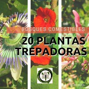 Plantas Trepadoras en los Bosques Comestibles