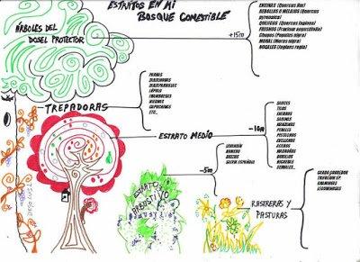 Especies del bosque comestible de palazuelos
