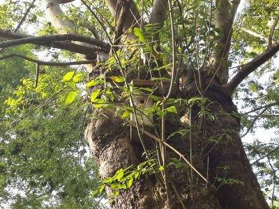 1 Foto del Bosque Comestible Subiuriu