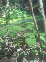 bosque comestible de pedrocampos 7