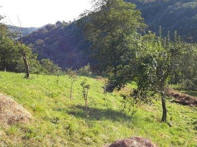 5 Bosque Comestible Subiuriu