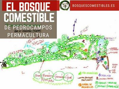 Bosque Comestible Pedrocampos