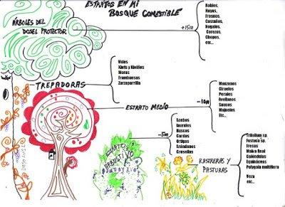 Selección de especies del bosque comestible del subiuriu
