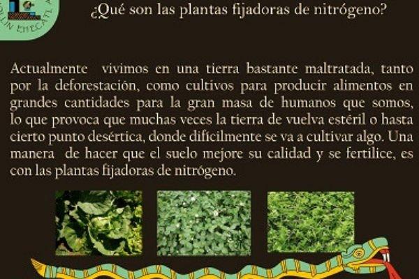 ¿Qué son las plantas fijadoras de nitrógeno?