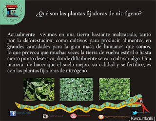 ¿Que son las plantas fijadoras de nitrogeno?