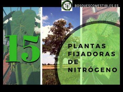 Plantas Fijadoras de Nitrógeno
