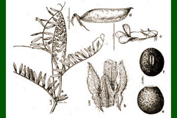 Plantas que aportan Nitrógeno