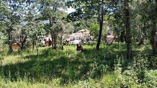 Zona verde actual del bosque comestible de ayla ara