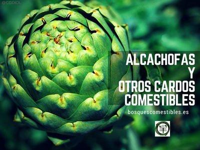 Alcachofas y Cardos, Flores Comestibles