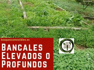 Bancales Elevados o Profundos en el Bosque Comestible