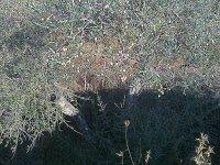 Leer la tierra en el bosque de alimentos de la Sabinas 13