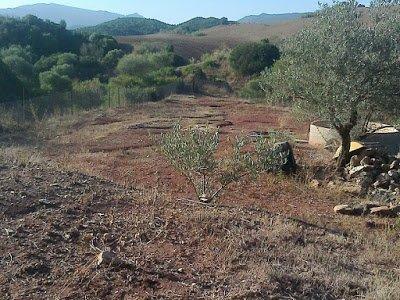 Leer la tierra en el bosque de alimentos de las Sabinas