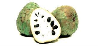 Chirimoyo - Arboles frutales para un bosque de alimentos 9
