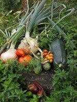 Cosecha en el Bosque Comestible de las Sabinas