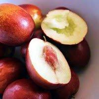 Azufaifos -Arboles frutales para un bosque de alimentos