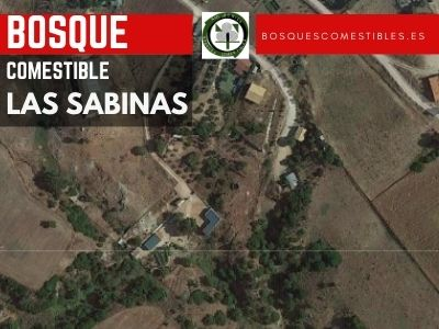 Bosque Comestible de las Sabinas