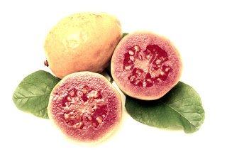 Guayabas - Arboles frutales para un bosque de alimentos