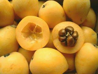 Nispero Japones - Arboles frutales para un bosque de alimentos
